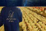آرتاجوجه بزرگترین واحد مرغ مادرگوشتی خاورمیانه در اردبیل ر احداث می کند